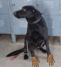Dog with human hands - photo#16